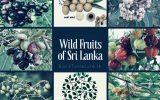native-wild-fruits-of-sri-lanka